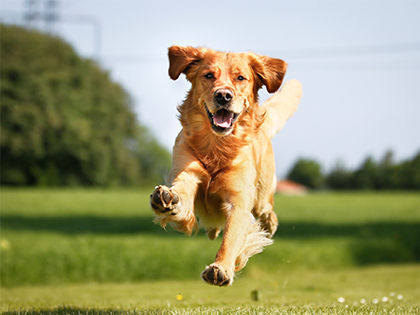 10 Healthiest Dog Breeds That Save You That Trip To The Vet