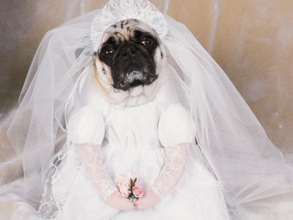 30 Hilarious Wedding Dresses That Should Have Never Come Down The Aisle