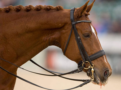 Gold Medal Athlete Quits Olympic Games To Save Her Horse