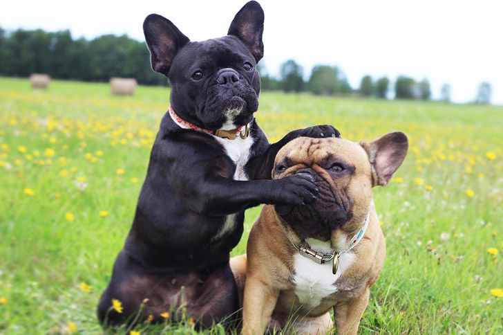 12-quiet-dog-breeds-that-are-perfect-roommates-for-you_1