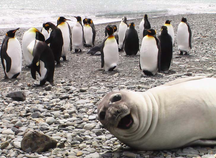 15-animals-that-enjoy-photobomb_1
