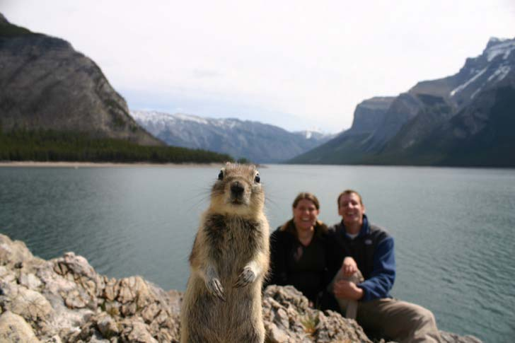 15-animals-that-enjoy-photobomb_3