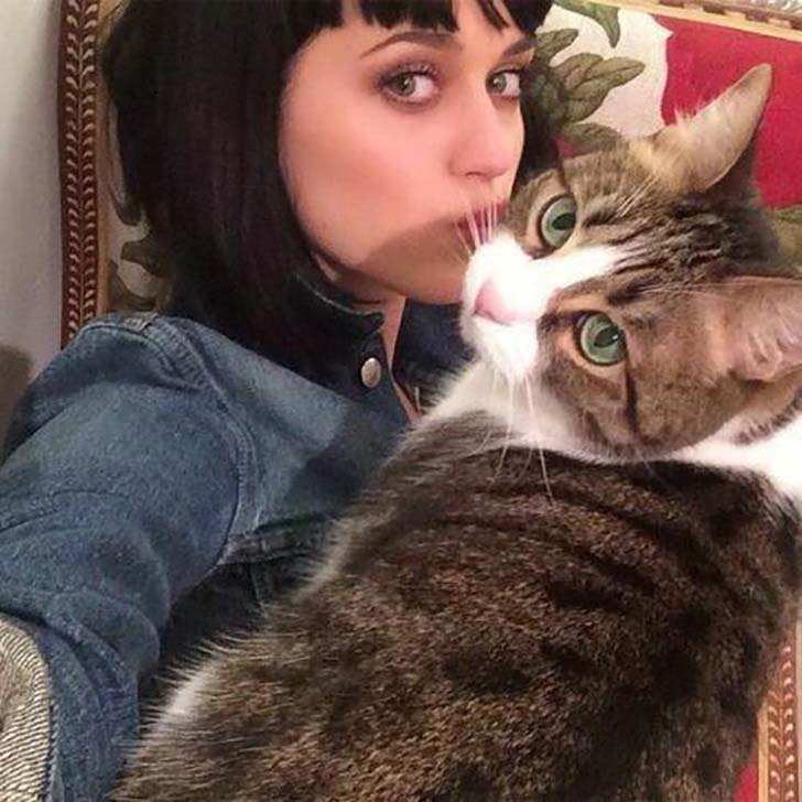 15-celebrities-who-are-just-as-obsessed-with-their-cats-as-you-are_1