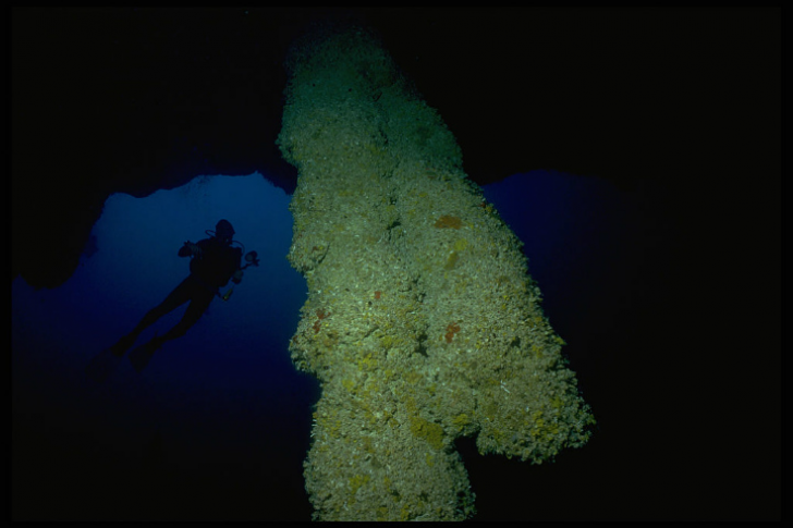 Men Dive Into The Blue Hole Of Belize, Uncovering A Dark Secret Hiding In The Murky Depths_8