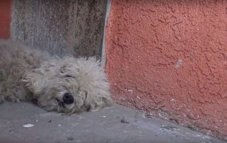 rescuers-were-heartbroken-when-a-homeless-pup-refused-their-help_3