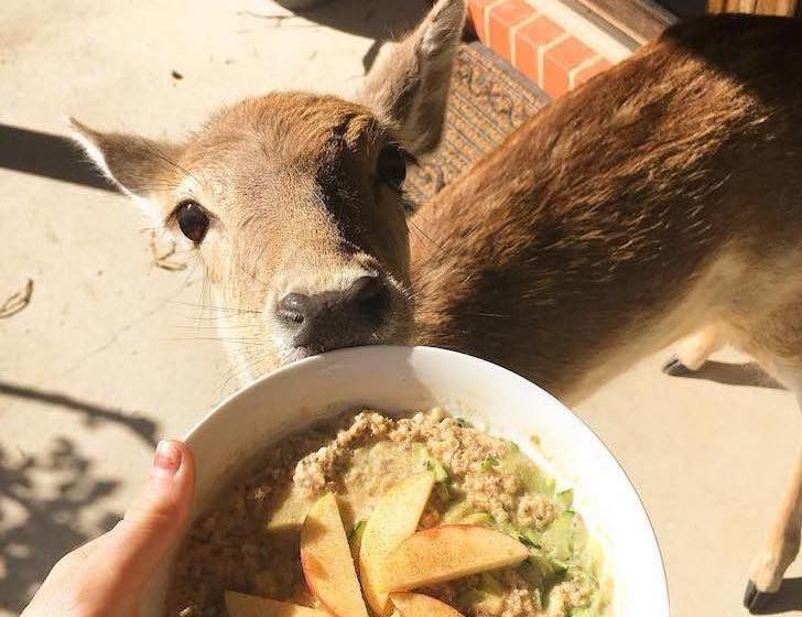 this-baby-deer-was-found-with-a-missing-leg-guess-what-happened-to-him-next_18