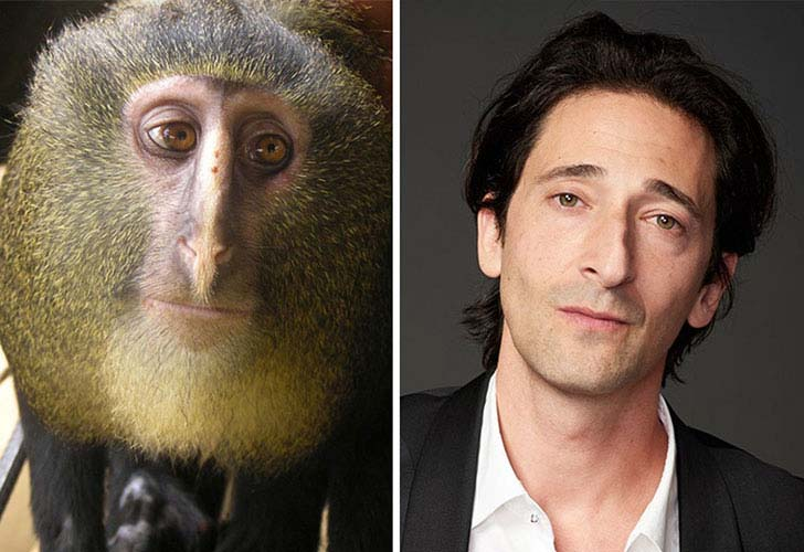 what-a-magic-30-animals-that-totally-look-like-celebrities_12