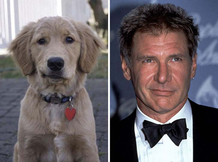 what-a-magic-30-animals-that-totally-look-like-celebrities_14