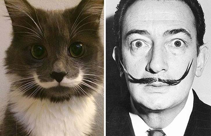 what-a-magic-30-animals-that-totally-look-like-celebrities_15
