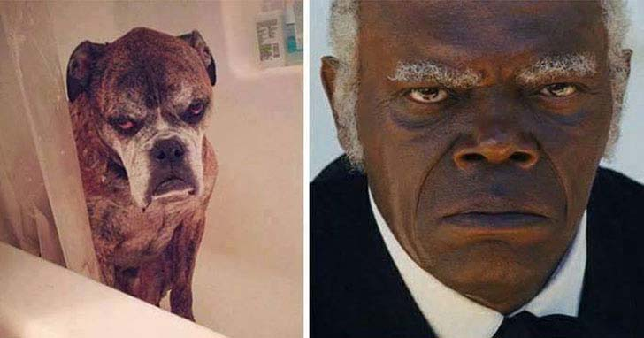what-a-magic-30-animals-that-totally-look-like-celebrities_2