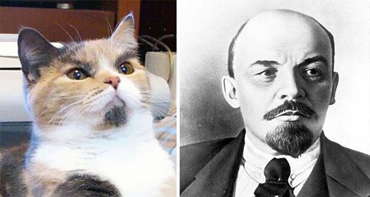 what-a-magic-30-animals-that-totally-look-like-celebrities_20