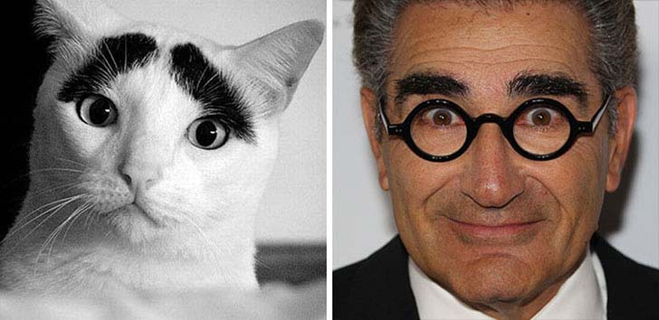 what-a-magic-30-animals-that-totally-look-like-celebrities_21