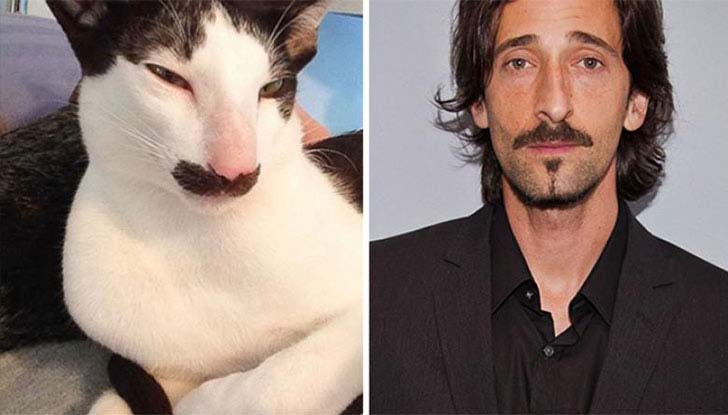 what-a-magic-30-animals-that-totally-look-like-celebrities_22