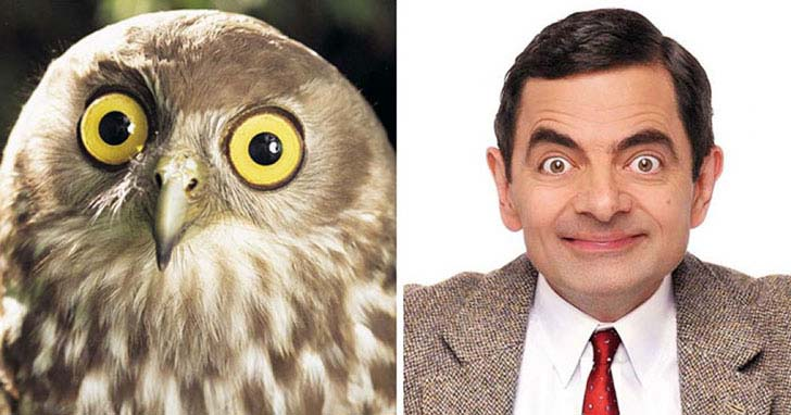 what-a-magic-30-animals-that-totally-look-like-celebrities_25