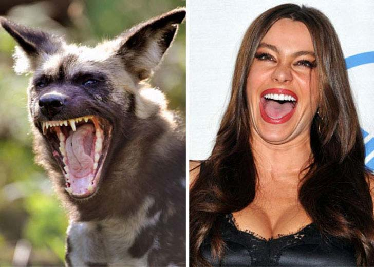 what-a-magic-30-animals-that-totally-look-like-celebrities_29
