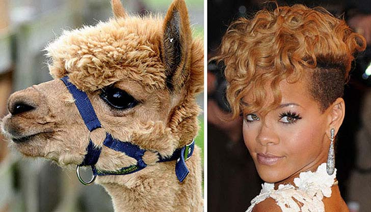 what-a-magic-30-animals-that-totally-look-like-celebrities_3