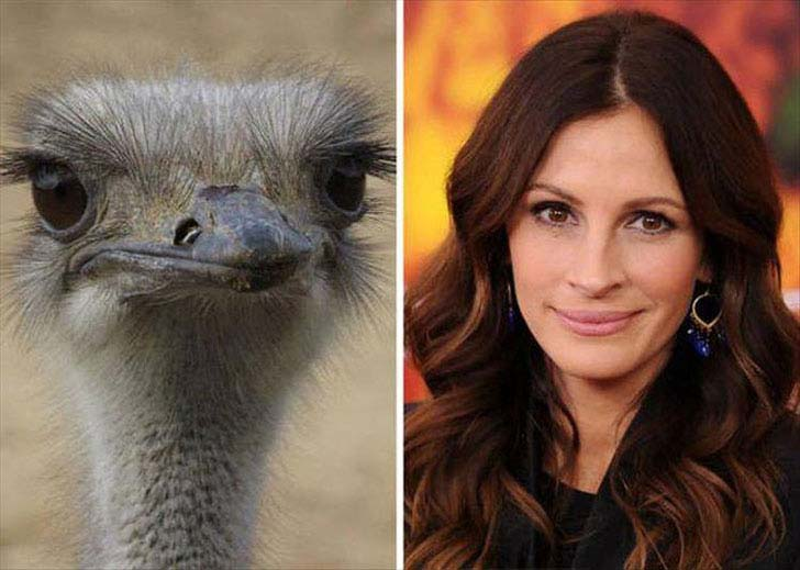 what-a-magic-30-animals-that-totally-look-like-celebrities_30
