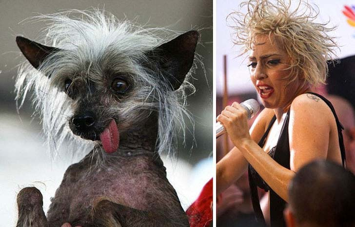 what-a-magic-30-animals-that-totally-look-like-celebrities_5