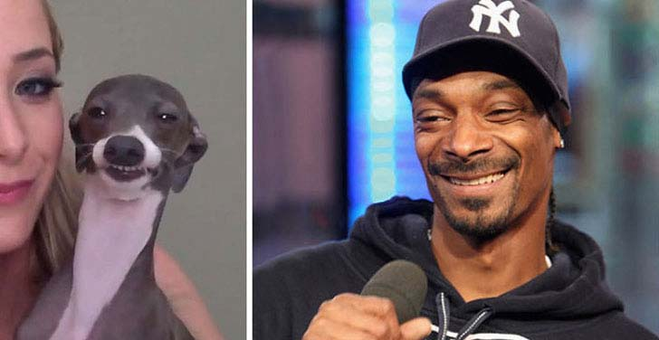 what-a-magic-30-animals-that-totally-look-like-celebrities_6