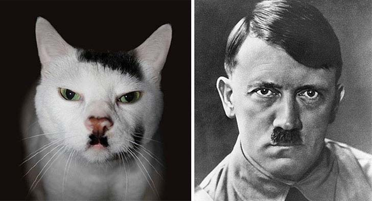 what-a-magic-30-animals-that-totally-look-like-celebrities_7
