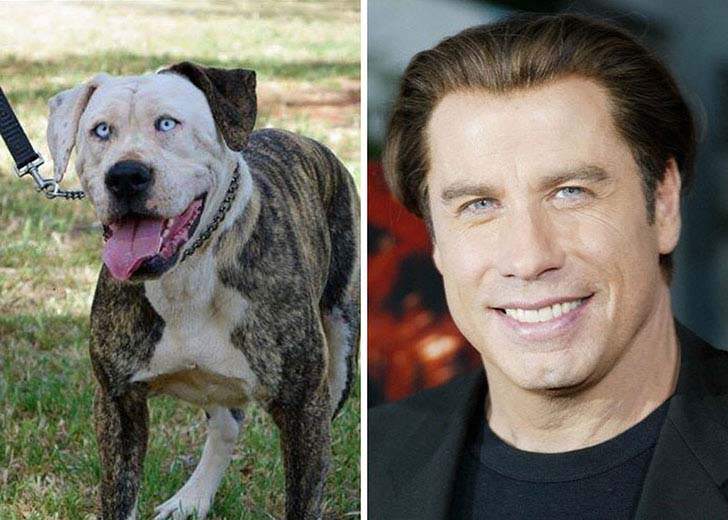 what-a-magic-30-animals-that-totally-look-like-celebrities_9