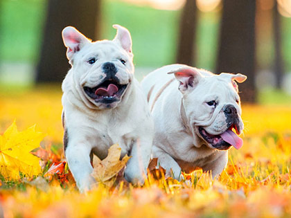 14 Dog Breeds That  Rarely Bark