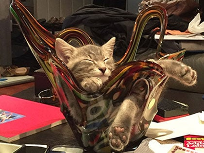 21 Funny Pics That Prove Cats Don't Need Beds
